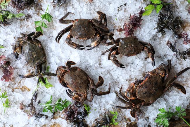 Big fresh crabs on cut ice cubes