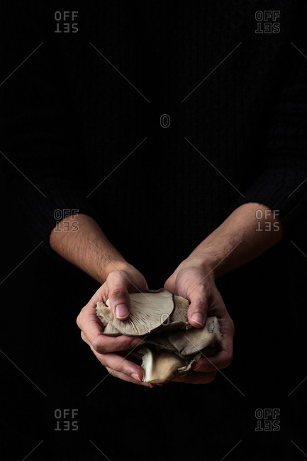 Fresh fragrant mushrooms gathered by hands on black background