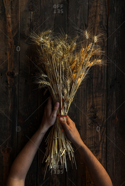 From above field bouquet of ripe wheat ears in hands on wooden background