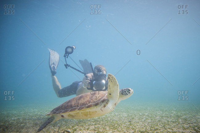 Diver taking photo of big water turtle on depth