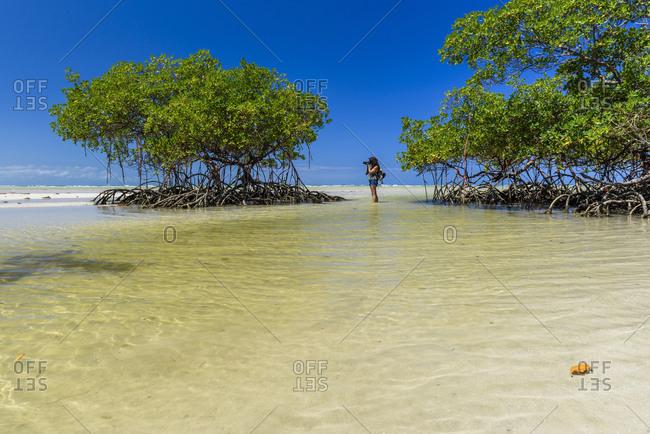Female photographer taking pictures near mangrove trees on tropical beach, Morro de Sao Paulo, south Bahia state, Brazil