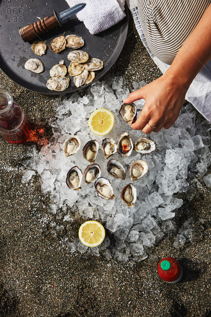Overhead view of a person preparing oysters