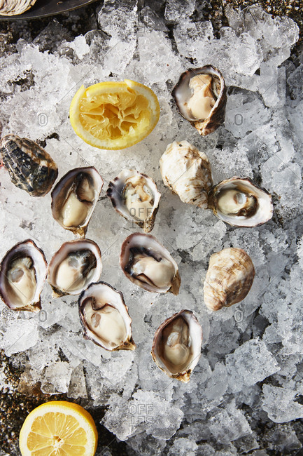 Overhead view of oysters on ice