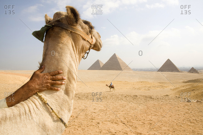 Camels ready for tourist rides in desert by pyramids in Cairo, Egypt