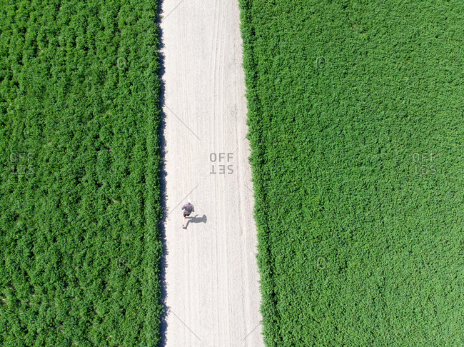Jogger seen from drone walking in an alfalfa crop, Salinas, California
