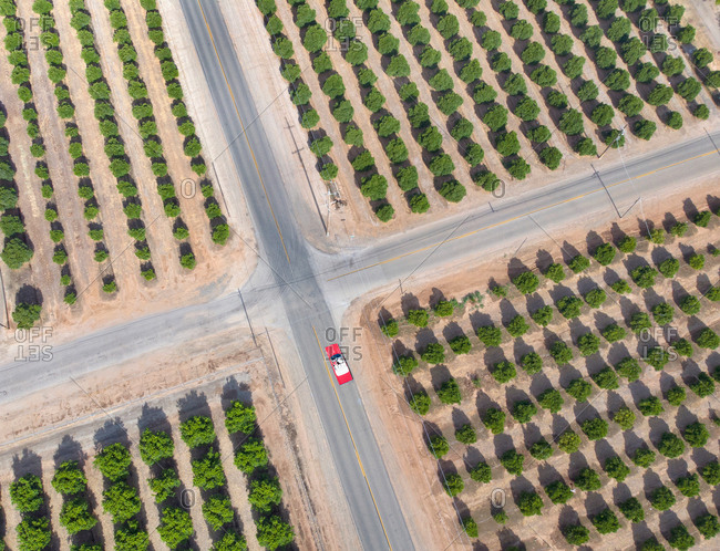 Red convertible driving country road by orange trees in the Bakersfield Valley Region, California, USA