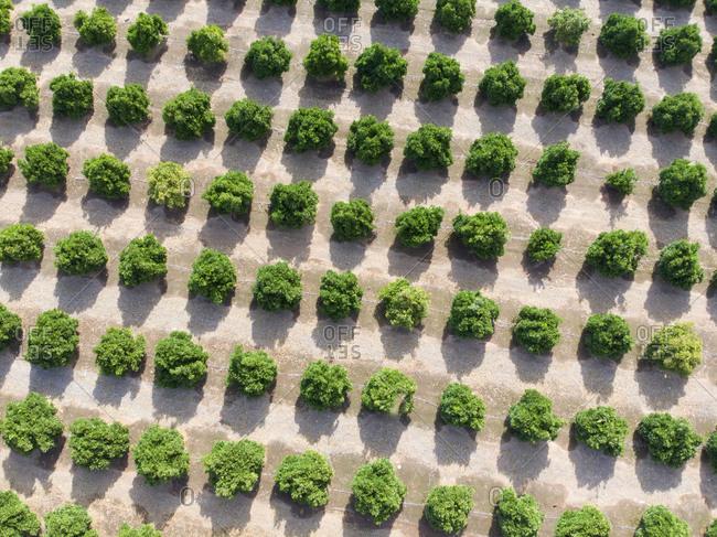 central valley california stock photos - OFFSET