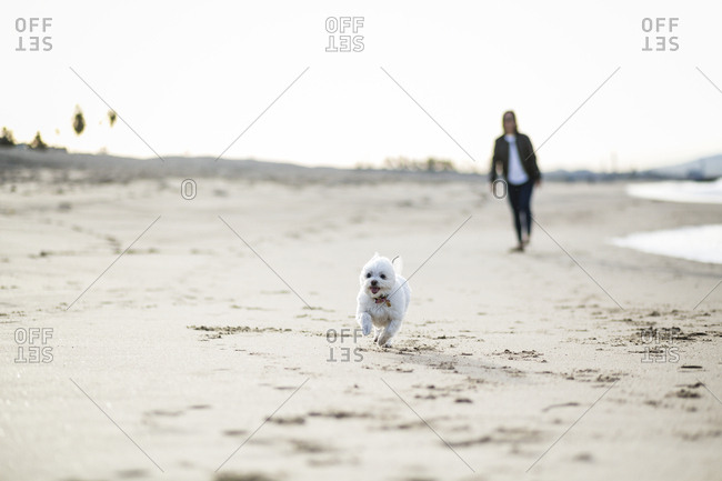 Dog running on sand with woman in background