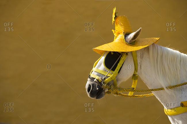 Horse wearing sombrero, Izamal, Yucatan, Mexico