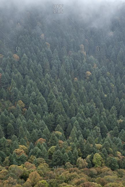 Trees in El Chico National Park in Hidalgo, Mexico