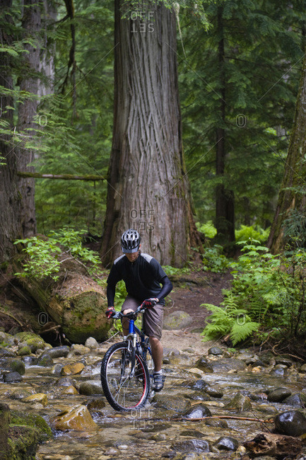 A male mountain biker pedals across a creek in an old growth forest.