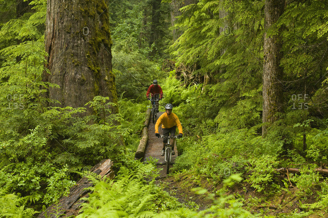 Two mountain bikers cross a wooden bridge in a lush, old growth forest.