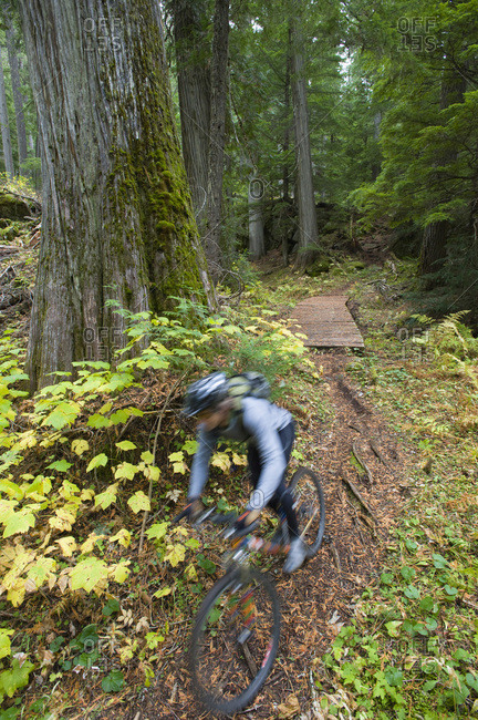 A man is a blur as he mountain bikes the lush, green forest of northern Idaho. (motion blur)