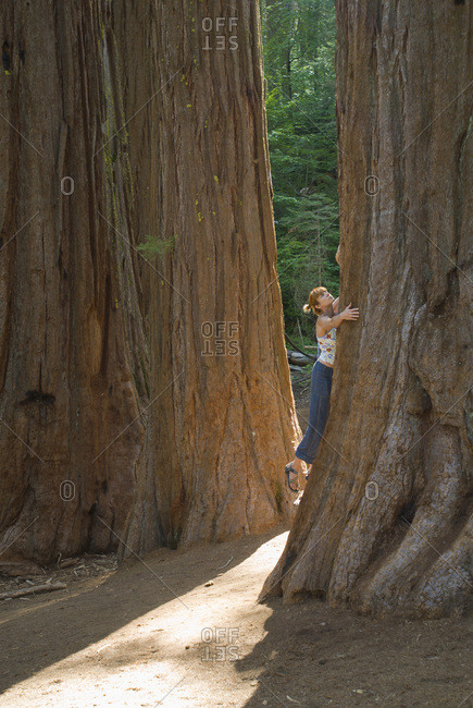 A young woman hugs a large redwood tree.