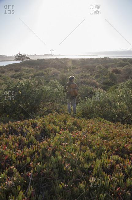 View to man walking through dense foliage near ocean edge