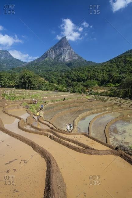 Sri Lanka - February 26, 2013: Villagers prepare rice fields