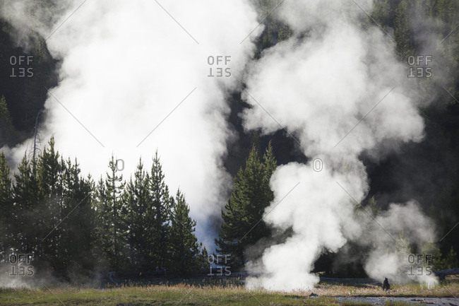 Steam from hot thermal pools envelopes nearby trees in Yellowstone National Park, Wyoming.