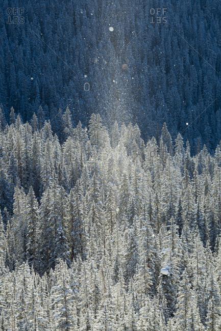 Snow-covered��� forest, Colorado, USA