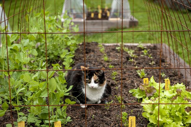 Cat resting in garden, Halifax, , Canada