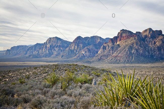 Red Rock Canyon National Conservation Area, Nevada, USA.