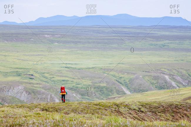 A Woman Is Hiking In The Delta Mountains, Alaska Range, Alaska, Usa