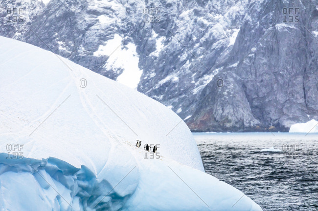 Chinstrap penguins an iceberg near Laurie Island, South Orkney Islands, Antarctica