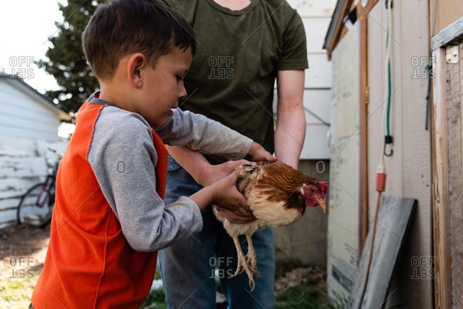 Boy grabbing a chicken