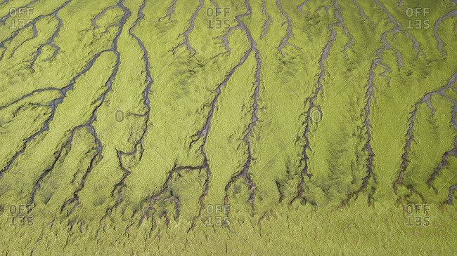 Aerial view of green algae on a beach in Pen�nsula de Valdes, Argentina, South America.