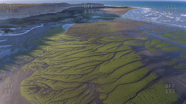 Aerial view of green algae on a beach in Pen�nsula de Valdes with a man and his shadow. Argentina, South America.