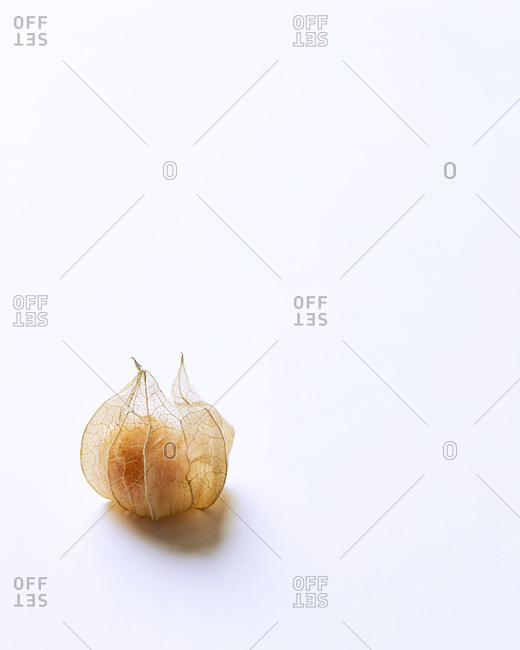 Single close Cape Gooseberry on white background