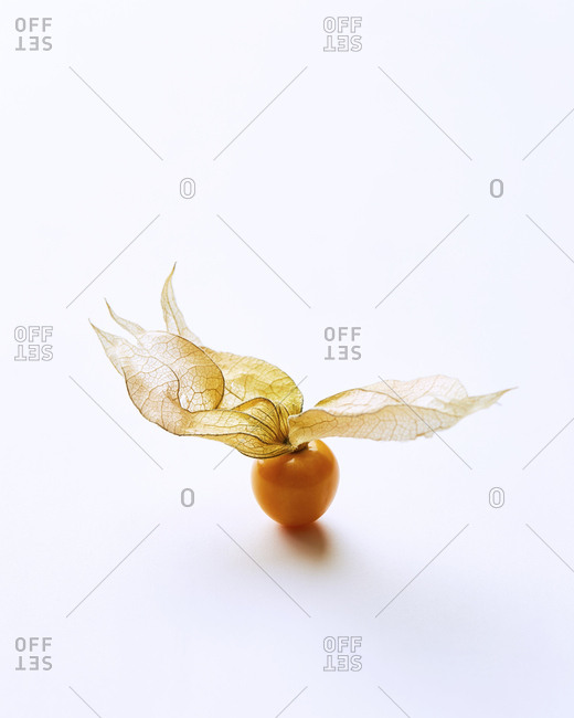 Dancing Cape Gooseberry with white negative space