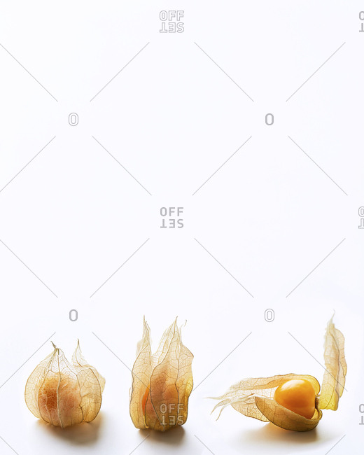 Three Cape Gooseberries with white negative space