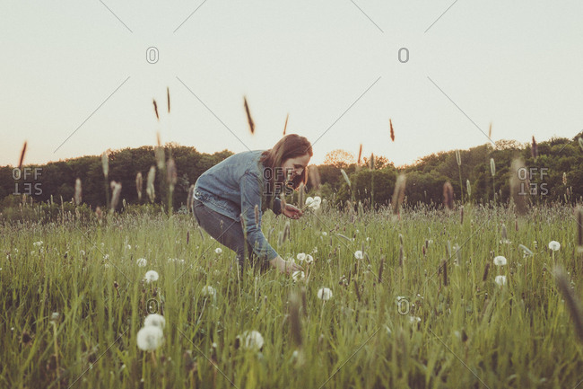 Smiling teenage girl picking blowballs on a meadow at evening twilight