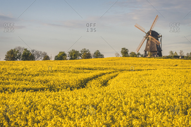 View to rape fields and Farver windmill- Wangel- Germany