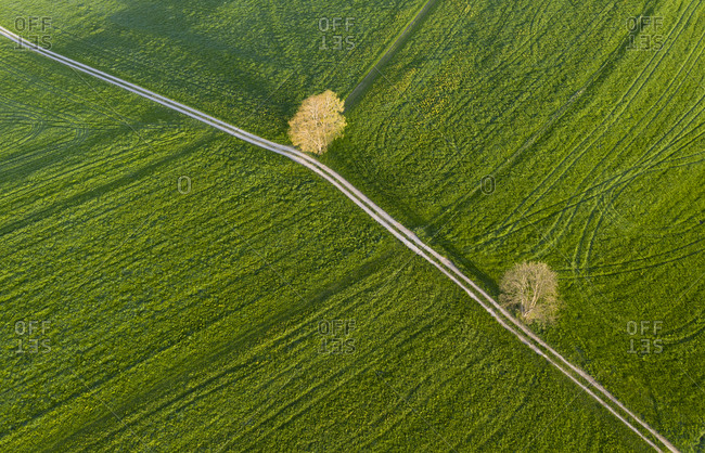Aerial view over meadow with dirt track and trees- Holzhausen- Bavaria- Germany