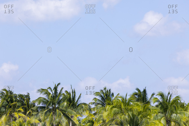 Palm trees and blue sky with clouds- Holbox- Yucatan- Mexico