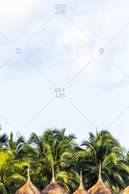 Palm trees- sunshades and sky with clouds at the beach- Holbox- Yucatan- Mexico