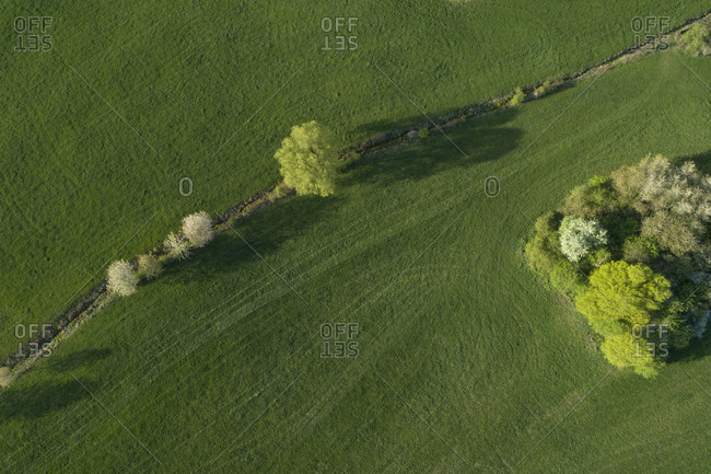 Abstract aerial view of trees in meadow- springtime- Franconia- Bavaria- Germany