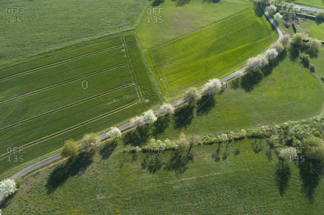 Aerial view of rural road with white blossoming trees and agricultural fields- Franconia- Bavaria- Germany