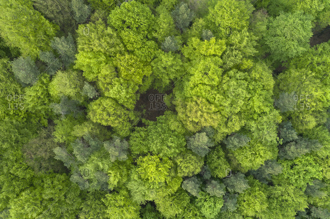 Aerial view of forest with fresh vital leaves directly from above in early springtime- Franconia- Bavaria- Germany