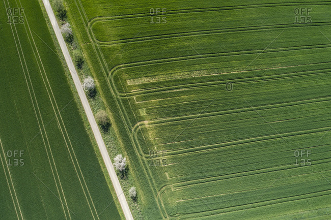 Abstract aerial view of rural road lined with trees and green agricultural fields- springtime- Franconia- Bavaria- Germany