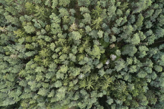Aerial view of forest with pine trees from above in early springtime- Franconia- Bavaria- Germany