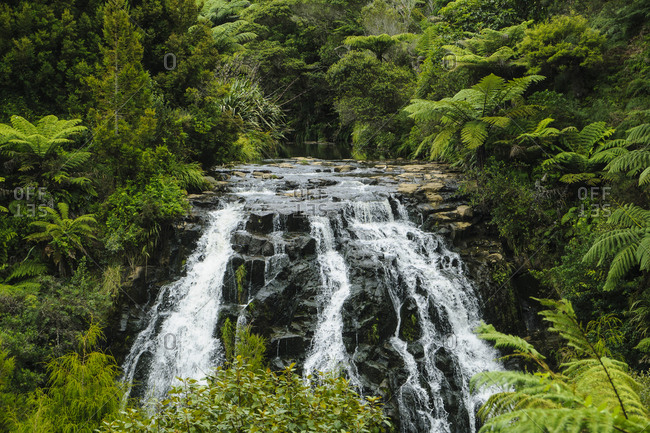 Waterfall near Tauranga- North Island- New Zealand