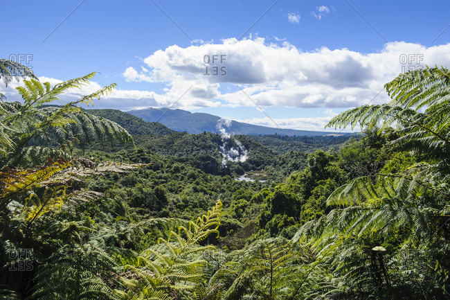 Geothermal active field in the Waimangu Volcanic Rift Valley- North Island- New Zealand
