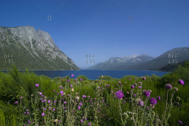 Mountain lake with wild flowers- Road of the Seven Lakes- Argentina- South America