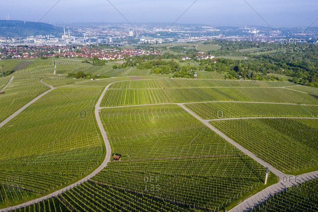 Aerial view over vineyards at Kappelberg in spring- Bad Cannstadt- Fellbach- Germany