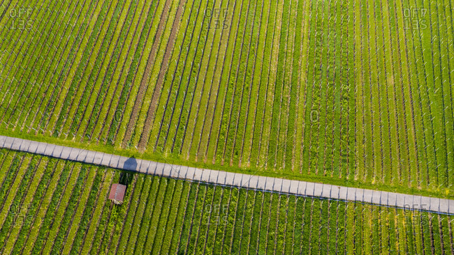 Aerial view over vineyards at Kappelberg in spring- Fellbach- Germany