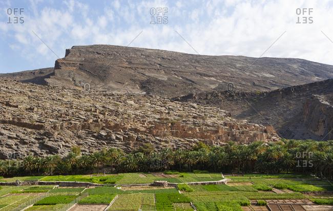 Oman- Ad Dakhiliyah Governorate- Ruins of Riwaygh as Safil- Oasis- Palm grove