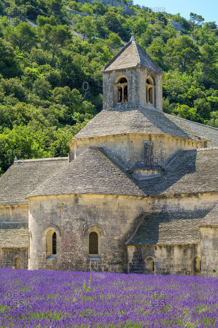 Lavender fields in full bloom in early July in front of Abbaye de Senanque Abbey, Vaucluse, Provence-Alpes-Cote d'Azur, France
