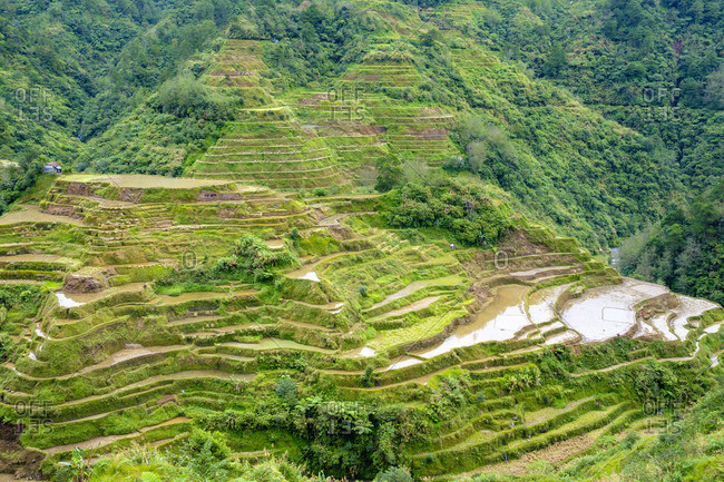 Banaue rice terraces in early spring, Mountain Province, Cordillera Administrative Region, Philippines